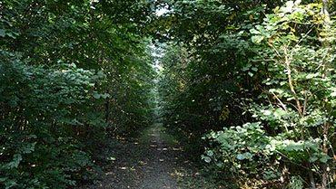 Skov i Hørning