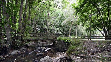 Maarslet-skov
